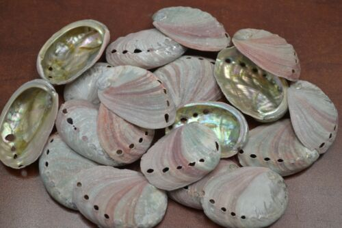 """10 PCS NATURAL RED ABALONE SEA SHELL (ONE SIDE POLISHED) 2"""" - 2 1/2"""" #7116A"""