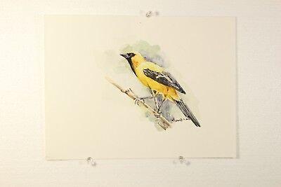 Original Bird Watercolor Painting