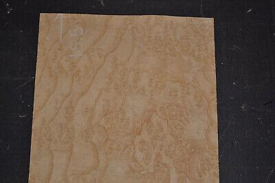 Ash Burl Raw Wood Veneer Sheet 8 X 14 Inches 142nd Thick 7651-17
