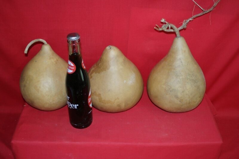 "3 -  6"" SECOND QUALITY MARTIN GOURDS (WASHED AND DRIED )"