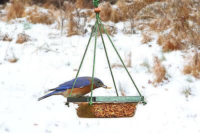 Songbird Essentials Hanging Mealworm Dish Bird Feeder SE517