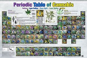 Periodic table poster ebay periodic table of cannabis poster 24x36 weed pot marijuana chart list 241349 urtaz Gallery
