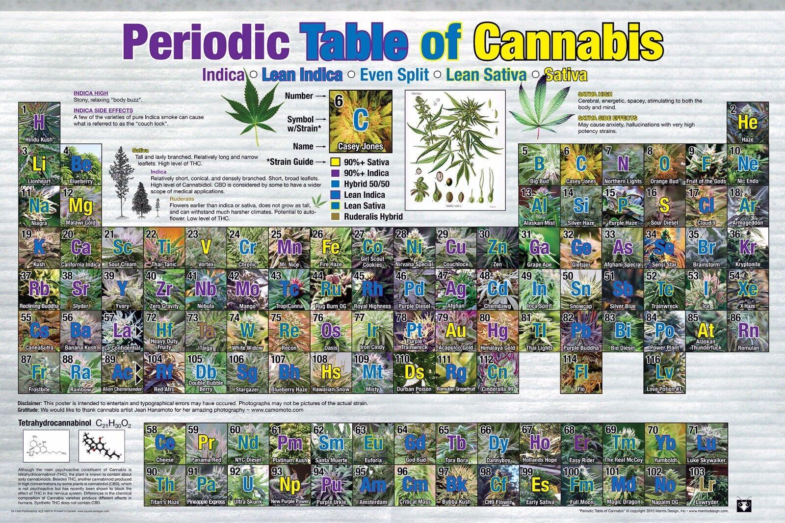 PERIODIC TABLE OF CANNABIS POSTER - 24x36 WEED POT MARIJUANA CHART LIST 241349