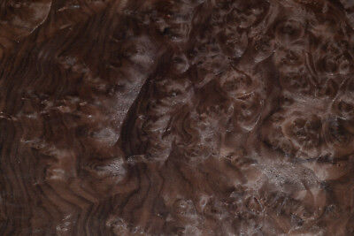 Walnut Burl Raw Wood Veneer Sheets 10 X 16 Inches 142nd Thick  E4705-8