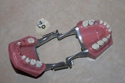 Ivorie Dentoform 762 Dental Study Typodont Removable Teeth