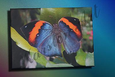 Indische Leinwand Kunst (Leinwand Kunstdruck Bild auf Keilrahmen Schmetterling Indisches Blatt)