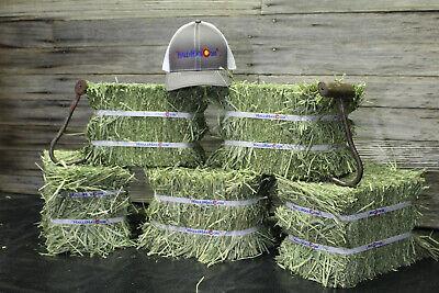 Timothy Hay 1st Cut WA 5+ lbs Mini Bales 4 pack OVER 20lbs!!! Guinea Pigs Rabbit