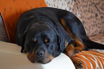 Bertis-Hundeshop