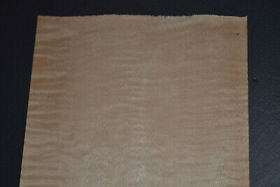 Curly Maple Raw Wood Veneer Sheets 5 X 29 Inches 142nd 8636-4