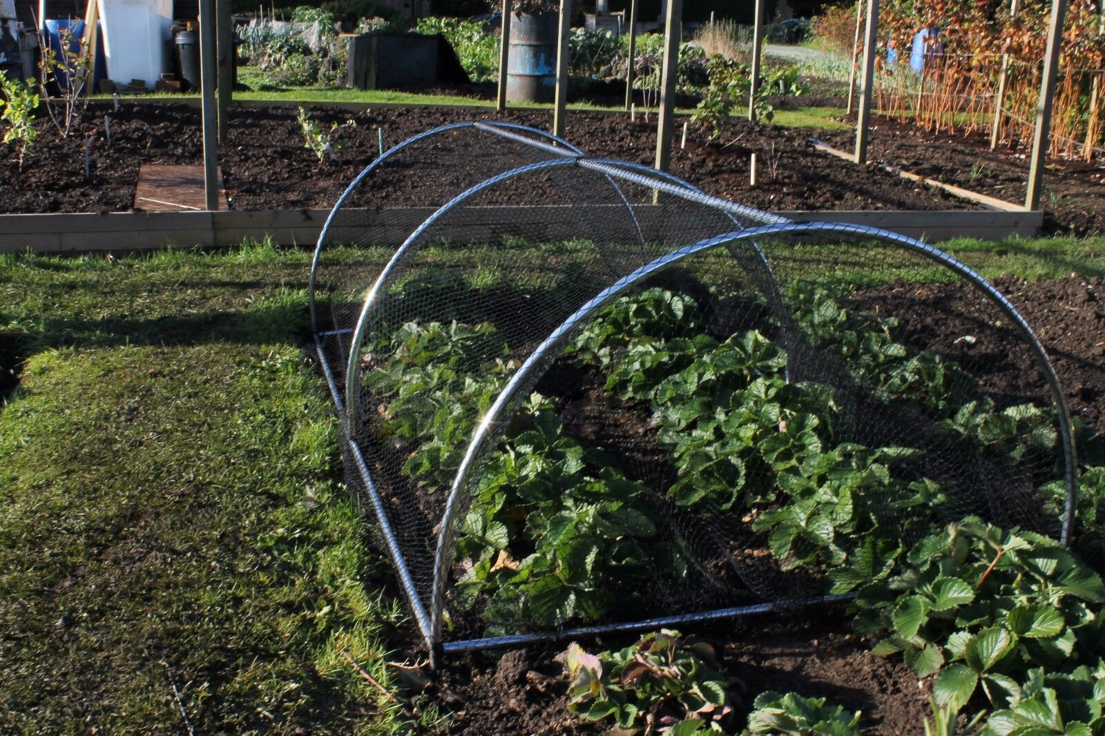 Portable domed garden fruit and vegetable cage protection for Portable vegetable garden