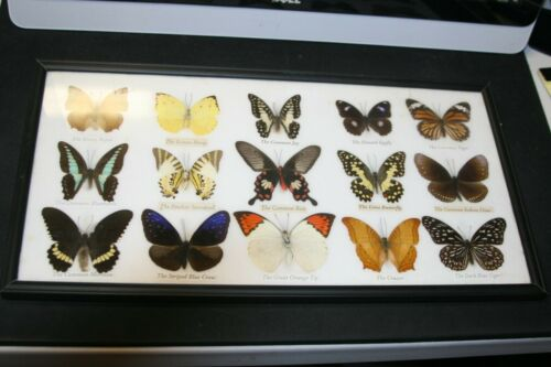 Lot of 15 real mounted and framed butterflies