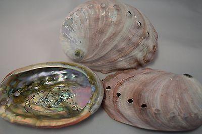 Red Abalone Sea Shell One Side Polished Beach Craft 4    5   3 Pcs