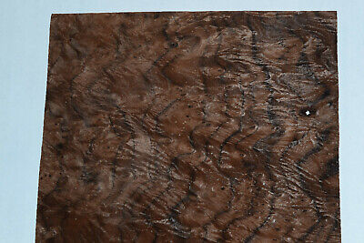 Walnut Burl Raw Wood Veneer Sheets 7 X 19 Inches 142nd Thick  7318-23