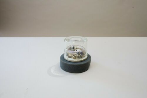Dynalite Clear Dome Flash Tube