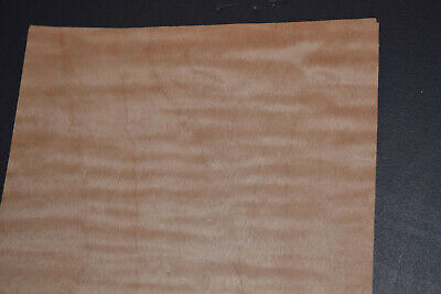 Curly Maple Raw Wood Veneer Sheets 6 X 47 Inches 142nd   8632-30