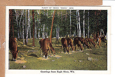 Deer Feeding Greetings from Eagle River Wis WI   for sale  Worcester