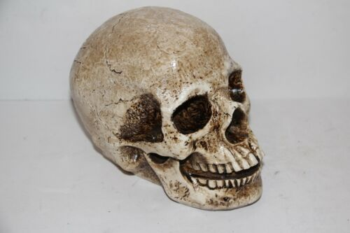 Realistic Resin Human Skull Replica Gothic Halloween Decoration Lifelike Size