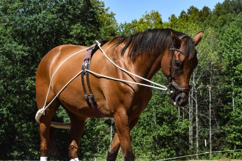 Leaders NEW Horse (Equine) Lunging Training System Lunging Aid (Pessoa based)blk