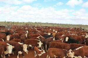 Cattle Station Manager