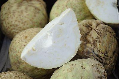 100 Samen Knollensellerie Prager Riesen Sellerie Selleriesamen Suppengrün