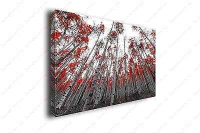 Red Leaves Black and White Forest HDR Photography Canvas Print Art Decor Wall