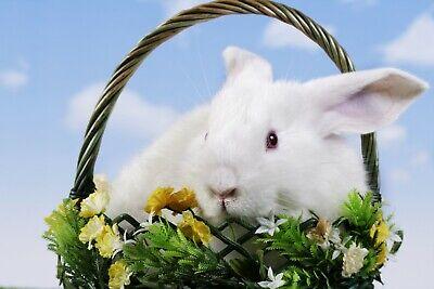 Kühlschrank magnet Ostern Tafel Blumen Foto Büro kuche Hase Souvenir Geschenk ()