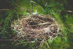 Thrifty Little Nest
