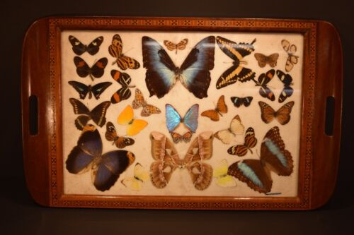 """Rio De Janeiro  MORPHO BUTTERFLY 25"""" X 15"""" TRAY INLAID TEAK EXCELLENT CONDITION"""