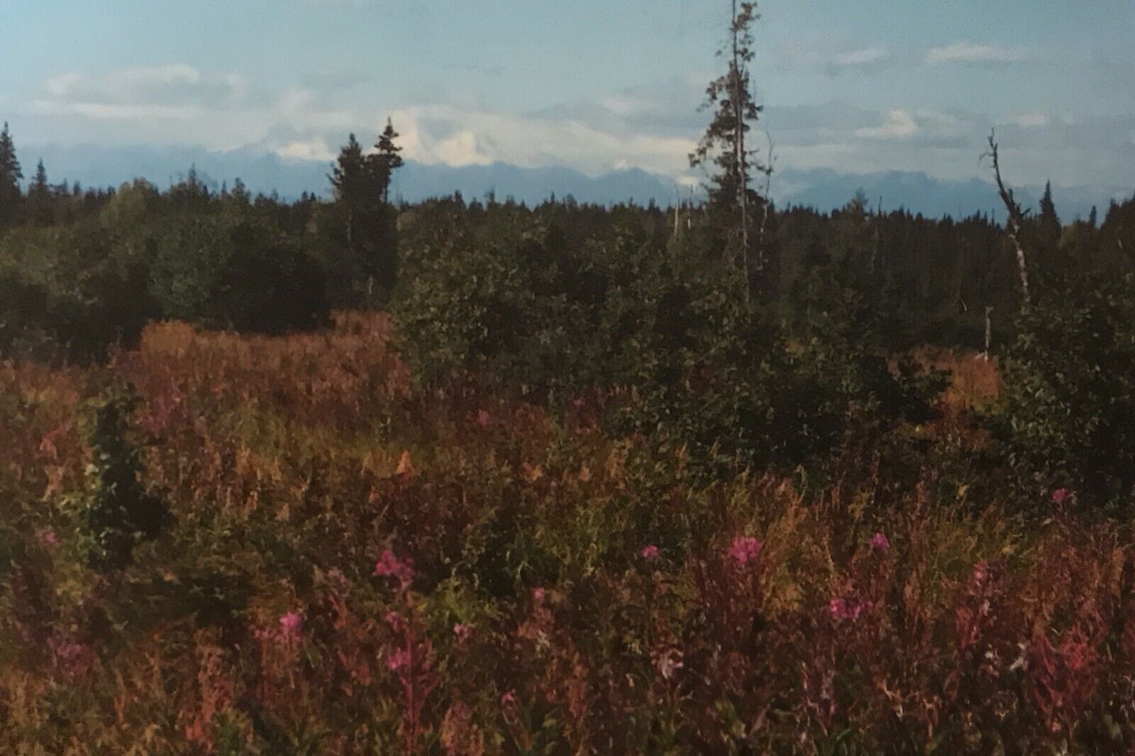 Vacant Property Homesteading Land On The Kenai Penninsula Of Alaska - $500.00