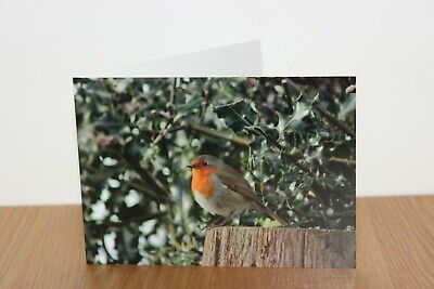 Robin Christmas greeting card, blank for own message ()