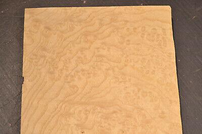 Ash Burl Raw Wood Veneer Sheet 6.5 X 13 Inches 142nd Thick   7679-47