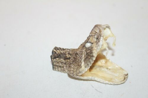 1 XL Large Rattlesnake head  6D08  side winder sidewinder diamondback diamond ba