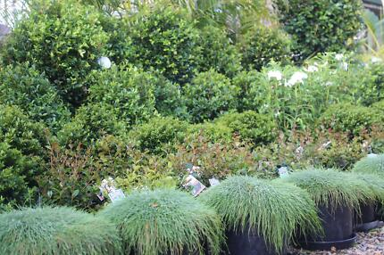THOUSANDS OF PLANTS FOR SALE * LIVING GIFTS THAT KEEP ON GIVING * Oxley Brisbane South West Preview