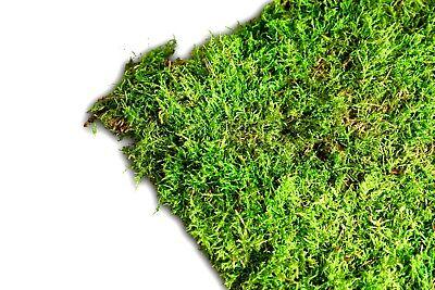 Moos kaufen echte Natur Moosmatten frisches Dekomoos Moosplatten Lappenmoos Moss