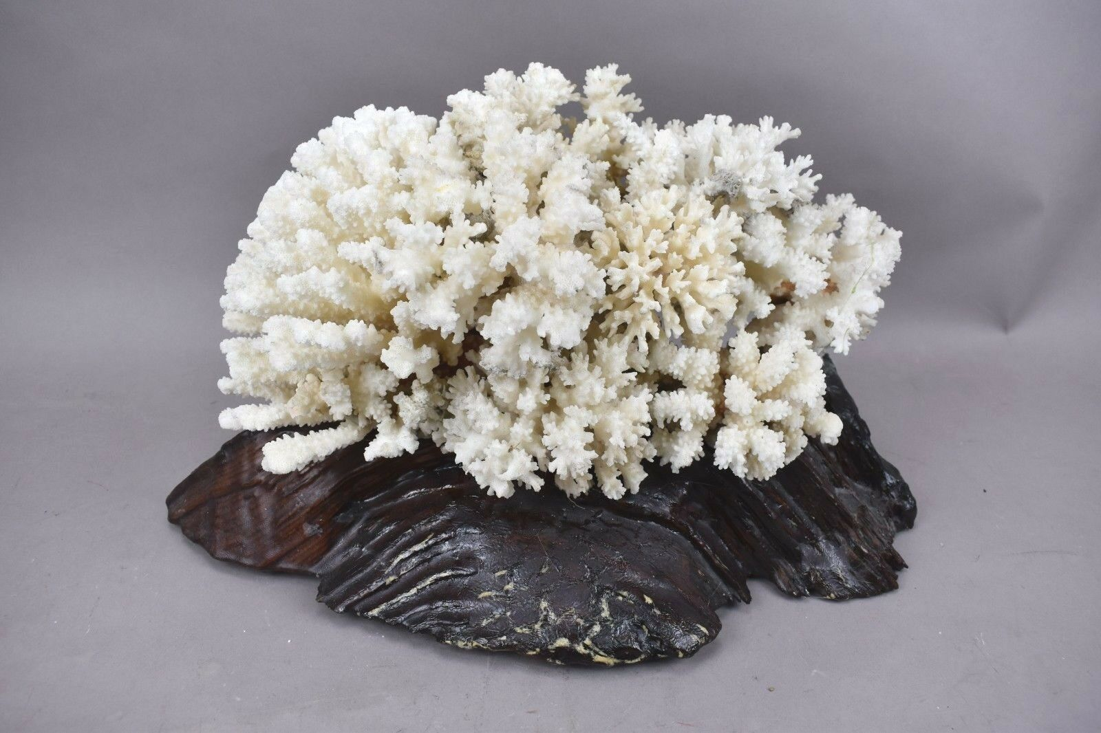 Natural Coral White Branch Finger Ocean Sea Water Reef Wood Base Aquarium Decor