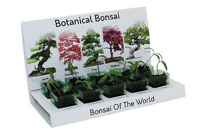Bonsai Tree Grow Your Own kit Botanical bonsai tree 100% Recycled 5 Varieties