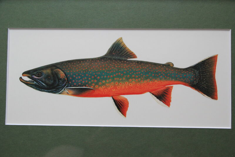 Brook Trout by Joseph Tomelleri Framed and Matted Print