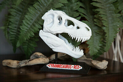 Used, T-Rex Skull 3D Printed High Quality - Tyrannosaurus Rex Fossil Replica Jurrasic for sale  Elyria