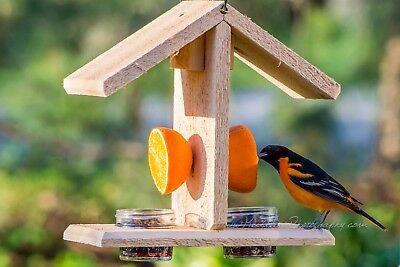"Baltimore Oriole 3/4"" THICK Cedar Feeder Jelly Orange Bird feeder Orioles!"