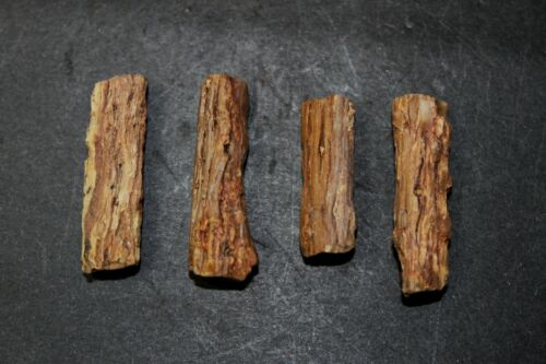 Petrified twigs set of three specimens from Patagonia, Argentina (H)