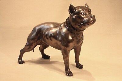 Pitbull - Staffy   -  Bronze