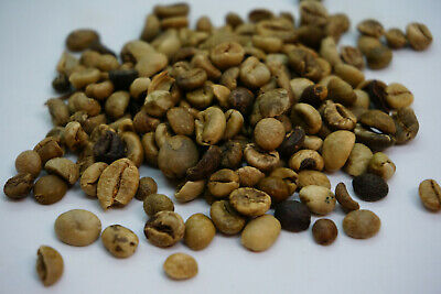 5 LBS Green Coffee -Rare Mondulkiri Cambodian ORGANIC, FAIR TRADE COFFEE BEANS Organic Fair Trade