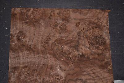 Walnut Burl Raw Wood Veneer Sheets 13 X 18 Inches 142nd Thick  7651-36