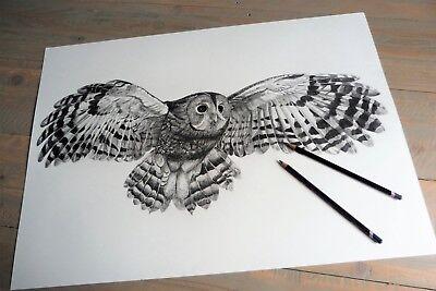 Original graphite pencil drawing, tawny owl in flight 2, art