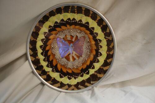 Brazilian butterfly plate, monarch and purple