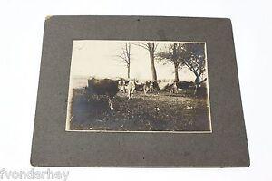 LG Org Cabinet Photo - Boyer's Cows Dreisbach Church New Berlin, Lewisburg PA