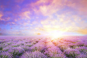 BEAUTIFUL LAVENDER FIELD CANVAS PICTURE #22 STUNNING LANDSCAPE NATURE A1 CANVAS