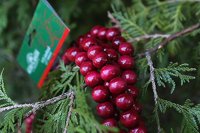 Kurt Adler Wood Cranberry Red Bead Garlands Christmas Tree Decor 9 FT sections