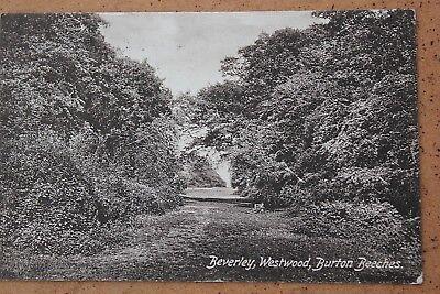 Beverley Westwood Postcard: Burton Beeches 1924