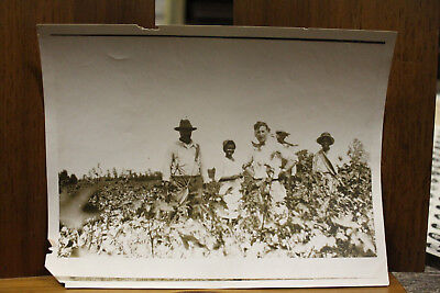 Original Photo Ca.1930's Dillon, South Carolina African Americans Picking Cotton